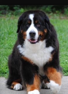 Berner | I just wanna hug 'em for a long long time.