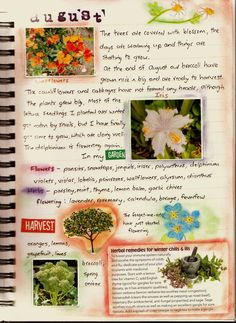 The most amazing garden journal. I aspire!