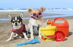 Barcelona creará zona de playa para perros en la temporada de baño