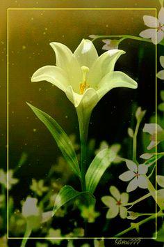 Imagenes en movimiento para celular  flor blanca