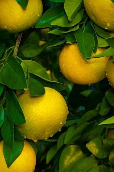 Lemon, housewives of target. You are not enough love to satisfy me! Nature Wallpaper, Wallpaper Backgrounds, Cellphone Wallpaper, Iphone Wallpaper, Fruit Photography, Fruit And Veg, Mellow Yellow, Food Design, Aesthetic Wallpapers
