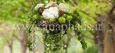 Anaphalis – Flower Design