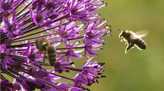 Please sign petition to help ban bee killing pesticides in The Biggest Little City on Earth, Reno, Nevada. Let our city councilmen and women know that as a tourist, you would LOVE to have Reno be a BEE Friendly City and ban NEONICS NOW! https://secure.avaaz.org/en/petition/Reno_Nevada_City_Council_Ban_the_use_of_Bee_Killing_Pesticides_and_Herbacides_on_City_Property/?nbjecib