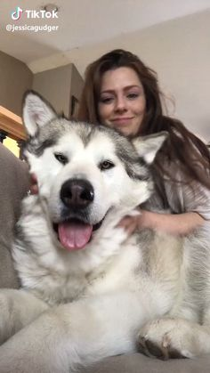 Huge fluffy husky #puppy #dog #pup #cute #cutie #sweet #cane #cagnolini #idee #redhead Big Fluffy Dogs, Fluffy Husky, Cute Husky Puppies, Husky Puppy, Malamute Puppies, Alaskan Malamute, Cute Animal Videos, Funny Animal Pictures, Cute Little Animals