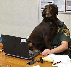 The dog sits on top of the Indiana conservation officer, who has a laptop computer in front of him