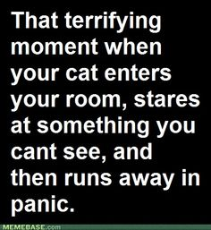 Our cat does this all the time.  Freaky.
