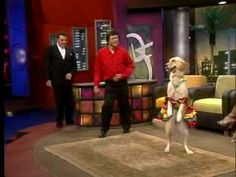 Jose Augusto Fuentes and Carrie the dancing dog in a Chilean talk show