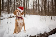 The Best Books for Dog Lovers Pet Dogs, Dog Cat, Pets, Dog Books, Scientific American, Types Of Dogs, Christmas Dog, Dog Pictures, Reindeer