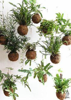 Unique Hanging Kokedama Ball Ideas for Hanging Garden Plants selber machen ball Indoor Gardening Supplies, Container Gardening, Succulents Garden, Garden Plants, Balcony Gardening, Air Plants, Indoor Plants, Cactus Plants, Garden Art
