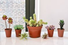 And of course, your succulents: | How To Make Your Own Succulent Corsage