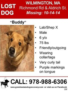 9-10-15 Possible sighting of Buddy in on 9-7-15 in Stoneham on Franklin St near Pond St  5-25-15 Recent possible sightings of Buddy on Grove Ave in Tewksbury near Silver Lake and others in the area. Please share to get more sightings of this boy!