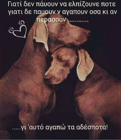 Kindness To Animals, Animals And Pets, Cute Animals, Greek Quotes, Love Words, Animal Kingdom, Best Quotes, Cool Pictures, Dog Lovers