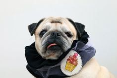 dog scarf pug neck warmer dog collar with illustrated brooch by treeillustration