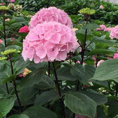 Black? Hydrangea with black steel... What do you think of this? #hydrangea #holexflower #flowersfromholland #flower #flowers #floral #florist #flowermarket #flowerstagram #flowerarrangement #flowerslovers #floweroftheday