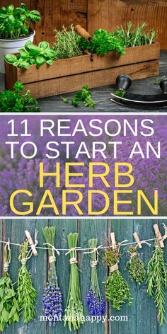 11 Reasons to Start an Herb Garden will show you all the reasons why you want to have fresh herb plants growing in your garden.  Design a garden you love and include these amazing plants with unlimited benefits.  Gardening is easy with the right easy to grow herbs. #herbgarden #herbgardening #herbgardeningideas #whyherbgarden #howtoherbgarden #herbgardeningforbeginners