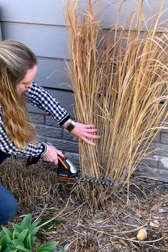While ornamental grasses don't need much to thrive, they do need a little upkeep every now and then. Follow these tips to keep your ornamental grasses healthy year after year. #ornamentalgrass #grassideas #landscaping #typesofgrasses #ornamentalgrasslandscape #bhg Ornamental Grass Landscape, Ornamental Grasses, Landscape Grasses, Little Gardens, Small Gardens, Raised Gardens, Vertical Gardens, Outdoor Plants, Outdoor Gardens