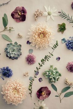 Beautiful Flower Ideas for Phone Wallpapers 5 Flowery Wallpaper, Flower Background Wallpaper, Flower Phone Wallpaper, Flower Backgrounds, Wallpaper Backgrounds, Iphone Wallpaper, Flower Aesthetic, Pretty Wallpapers, Wall Collage