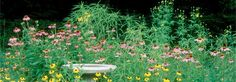 Lots of lists for specific native gardening needs!Native Midwest Plants for Beginning Gardeners