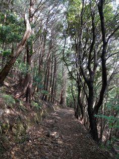 On the Kashiwazaka Trail on the long stretch between Kanjizaiji (Temple 40) and Ryukoji (Temple 41), Kochi prefecture.