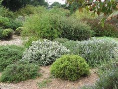 The trial garden at Pépinière Filippi (www.jardin-sec.com), Meze, France by hortulus, via Flickr