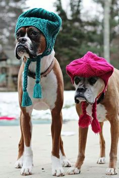 """""""Are you kidding me? Our humans expect us to wear these in public? On three...shake your head. One..."""