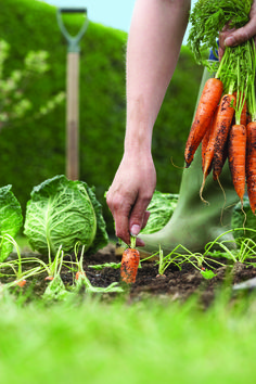 Vegetable Gardening More Popular with Millennials