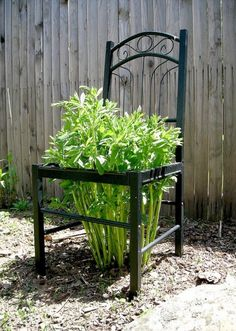 gammel stol i haven med løvstikke