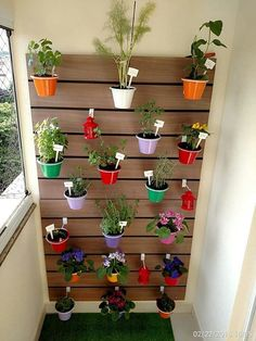 Varanda E Plantas