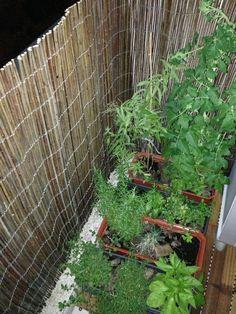 O nosso jardim de varanda!