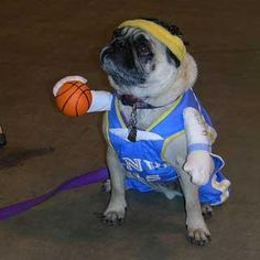 dog dressed up as a basketball player