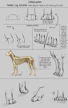.:Canine Leg Tutorial:. by LikelyLupine on deviantART