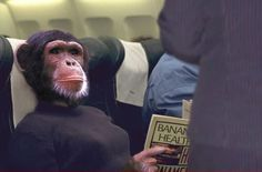 Plane & Ape