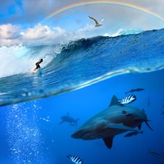 splitted two parts image extreme story about the ocean and the surfer that sliding a surfing board on wave and angry hungry bull-shark swimming underwater underneath him Shark Images, Jacques Yves Cousteau, Shark Swimming, Images Of Colours, Under The Sea, Underwater, Whale, Photo Editing, Surfing