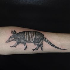 love this armadillo illustration i even use this photo as a wallpaper for my inked. Black Bedroom Furniture Sets. Home Design Ideas