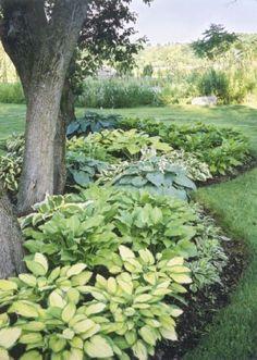Landscaping Around Trees, Modern Landscaping, Front Yard Landscaping, Landscaping Ideas, Mulch Ideas, Mulch Yard, Shade Landscaping, Outdoor Landscaping, Gardening