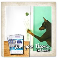 Home on pinterest remove popcorn ceiling world market for Hardwood floors dog nails