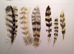 Bird Feathers, Skulls, Illustration, Artist, Projects, Owl, Painting, Log Projects, Blue Prints