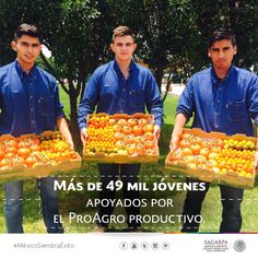 Más de 49 mil jóvenes apoyados por el PROAGRO Productivo. SAGARPA SAGARPAMX #MéxicoSiembraÉxito