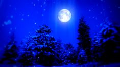 New Year Snow Christmas and Moon ( Series 3 - Version from 1 to 12 ) - HD stock footage clip Blue Christmas, A Christmas Story, Christmas Cards, Full Moon This Month, Cold Moon, Make Christmas Great Again, Four O Clock, Love Blue, Color Blue