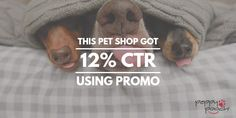 Peppy Pooch saw improved impressions, click through rates, and cost per click after using just one Promo video in paid social media campaigns. Video Advertising, Pet Shop, Pets, Shopping, Pet Store, Animals And Pets