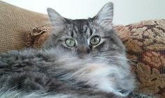 Moto Kitty, a beautiful boy