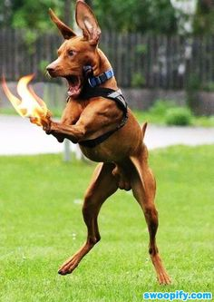 My Paws Are On Fire! #humor #lol #funny
