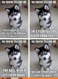 www.obedient-dog.net