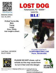 Lost Dog - Mix - Tallahassee, FL, United States