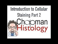 3 Min Histology Intro To Cell Staining 2 - YouTube