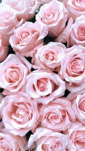 64 Ideas for flower wallpaper iphone backgrounds wallpapers pink roses Pink Wallpaper Backgrounds, Flower Phone Wallpaper, Iphone Background Wallpaper, Rose Wallpaper, Trendy Wallpaper, Flower Backgrounds, Aesthetic Iphone Wallpaper, Aesthetic Wallpapers, Backgrounds Free