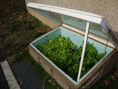 Home Made Cold Frame- a window, some boards, two hinges and some insulating foam. Still harvesting salad in January in Missouri!