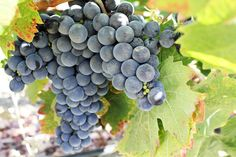 Exploring Paso Robles: Wineries, Restaurants and More