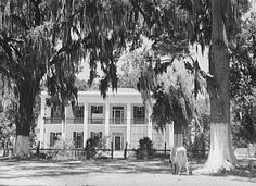 Old Jackson Plantation home, owned by a                     sugarcane planter. Schriever, Louisiana (LC)