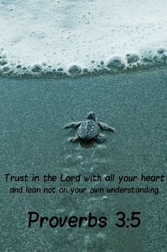 Proverbs 3:5  In all your ways, acknowledge him, and he will make straight your path.